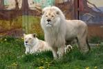 Ярославский зоопарк отпраздновал своё 10-летие!