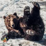 Медведи Ума и Топа проснулись!