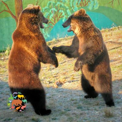 6 апреля 2019 - День пробуждения медведей!