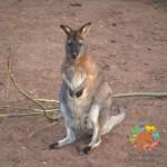 Новые обитатели зоопарка из Новосибирска!
