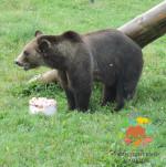 Вкусное лакомство для обитаталей зоопарка