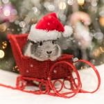 """Рождественский ZOO-маркет """"Пушистый подарок"""""""