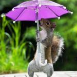 В зоопарк - при любой погоде!