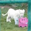 Игрушки-кормушки для животных