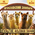 Открытие новой экспозиции Ярославского зоопарка – Альпака парка