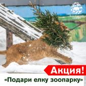 "Акция ""Подари елку зоопарку"""
