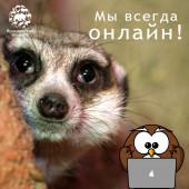 Ярославский зоопарк всегда онлайн!