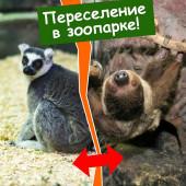 Переселение в зоопарке!